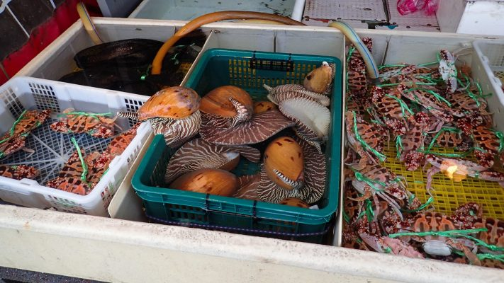 Giant Sea Snails in Heping's Fish Market, Keelung, Taiwan