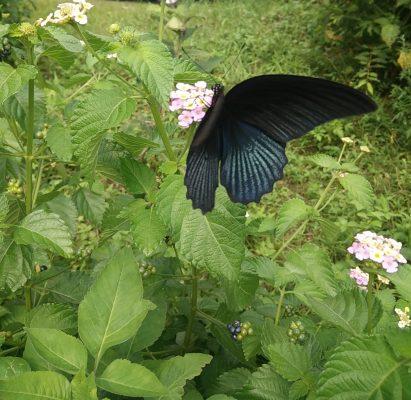 蝴蝶小天地