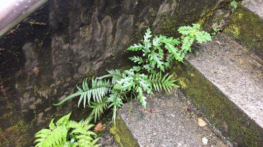基隆景點中正公園採蕨活動